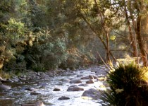 Cockerawombeeba Creek, Forbes Valley NSW