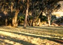 Shadows, Polblue Swamp NSW